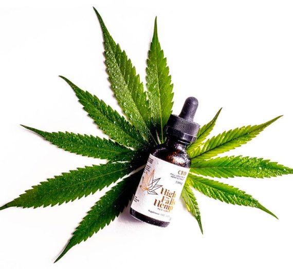 CBD Oil For Dogs – Can It Help Our Pup?